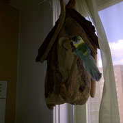 Our driftwood bird house hung in Manhattan, on the Upper East Side