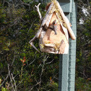 The chickadee moving in to Pat & Larry Zeh's maple wood bird house in Florence, OR.