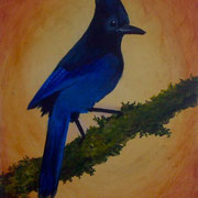"Stellar's Jay, (sold) 8"" x 10"", on board, 2010"