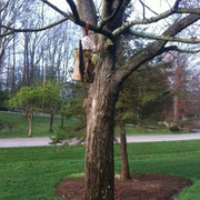 A Given Back bird house hung on the DeBruicker grounds in Bloominton, Indiana