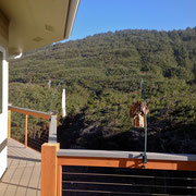 Our Given Back Suet feeder directly on the Oregon Coast, on private porch near Stonefield Beach