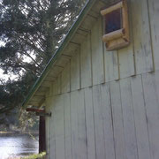 1940's outbuilding on Sutton Lake with our custom bat house