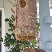 A 2010 edition Given Back bird house in Douglas Fir, from Deb Mello