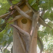 From Ken in North Carolina, a cedar driftwood house with twice returning residents 2011 & 2012