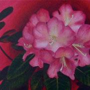Rhody Beauty, Detail
