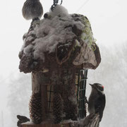 Donna Morse sent in these amazing photos of her birds feasting during the crazy 2014 winter storm in the valley this February