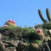 Flora de Punta de Lobos