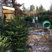Weihnachtsbäume selber schlagen, dann einnetzen lassen. Harzer Tanne