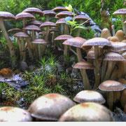 .. Pilze im Wald