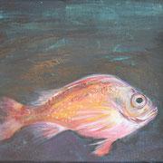 Rotbarsch, Acryl auf Leinwand, 2018, 25 cm x 30 cm x 1 cm
