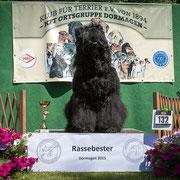 """Russischer Schwarzer Terrier """"Majestät-Karl-Ludwig vom Dubrava"""""""