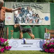 """Welsh Terrier Rüde """"Kieron von der Düstermühle"""""""