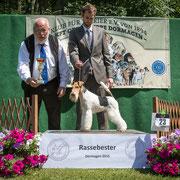 """Drahthaar- Foxterrier Rüde """"Scot von den schönen Bergen"""""""