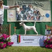 "Parson Russel Terrier Hündin ""Fillmore Zapata"""