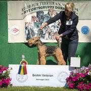 "Bester Veteran: Welsh Terrier Rüde ""Henry von der hohen Flur"""