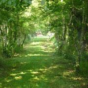 Chemin à Lanveur