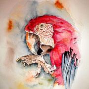 "ART HFrei - ""Roter Ara"" - Aquarell - 2002"