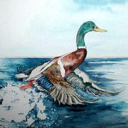 """ART HFrei - """"Wildente"""" - Aquarell - 2003"""