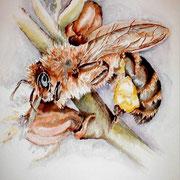 "ART HFrei - ""Honigbiene"" - Aquarell - 2002"