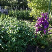 Fleurs et Pommes de terre