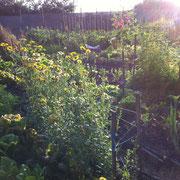 Rayon de soleil entre Fleurs et Légumes
