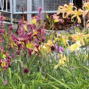 Liquid Memory und Garden Butterfly