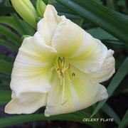 Celery Plate        Santa- Lucia 2000      dip   dor