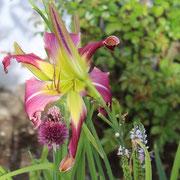 Garden Butterfly (Gossard 2011)