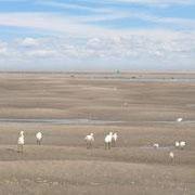 grande marée - le sable à l'infini