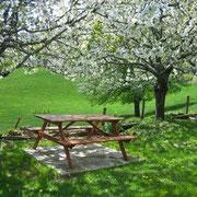 Sous les cerisiers en fleur à La Rousselie