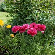 Les fleurs à la Rousselie