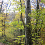 Début d'automne