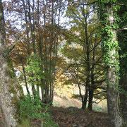Les arbres aux couleurs d'automne