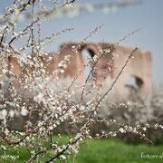 Fotorealis. Villa dei Quintili