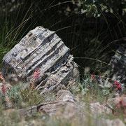 Natursteine - Terra Domo Filderstadt