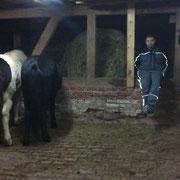 und auch der Chef ist super zufrieden mit den einmaligen Pferden