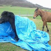 Pony einpacken