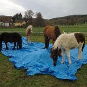 so coole Pferde :)