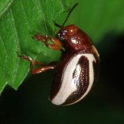 Unknown beetle  Macrophotography by Randy Stapleton
