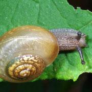 Land Snail, Macrophotography by Randy Stapleton
