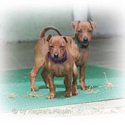 Evolution (grün) & Emeley (lila)