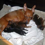 Als Mami hat man es nicht leicht ;-) Die Kleinen sind nun 10 Tage alt