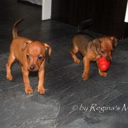 Faye & Chocolata 6,5 Wochen