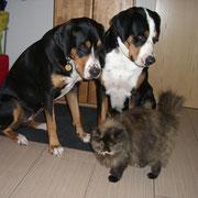 Athena & Luna mit todesmutiger-scheiß mir nix- Katze im Vordergrund