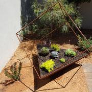 Clovelly, Sydney - Australian native / succulent desert garden