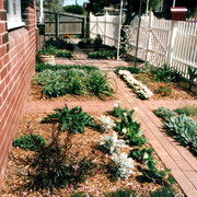 Ashfield, Sydney - cottage garden design for a Federation home