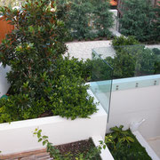 North Rose Bay - multi-unit development garden terraces