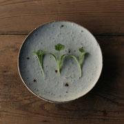 コリアンダー ベビーリーフ(Coriander sprout)
