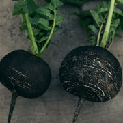 黒丸大根(Blackradish)