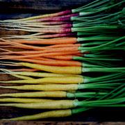 細出し人参(Thin carrots)